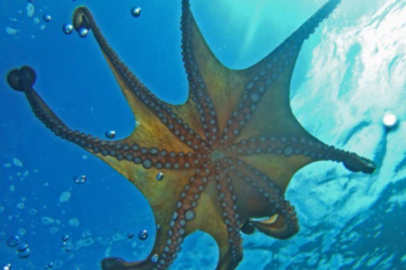 Dubrovnik Aquarium