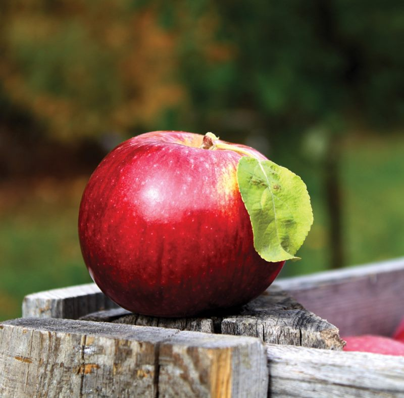 Three Golden Apples - Program for children as part of World Apple Day