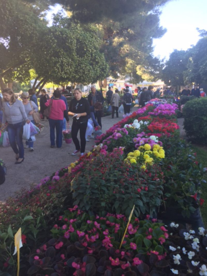 DUBROVNIK TOURIST BOARD ORGANIZED THIRD SUCCESFUL SALE OF FLOWERS