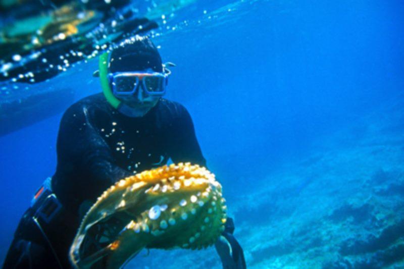 Для любителей подводного плавания...